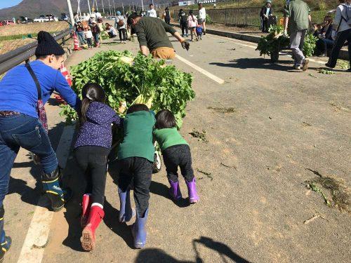 毎年11月3日の文化の日に開催される、山梨県北杜市のダイコン祭りで掘ったダイコン